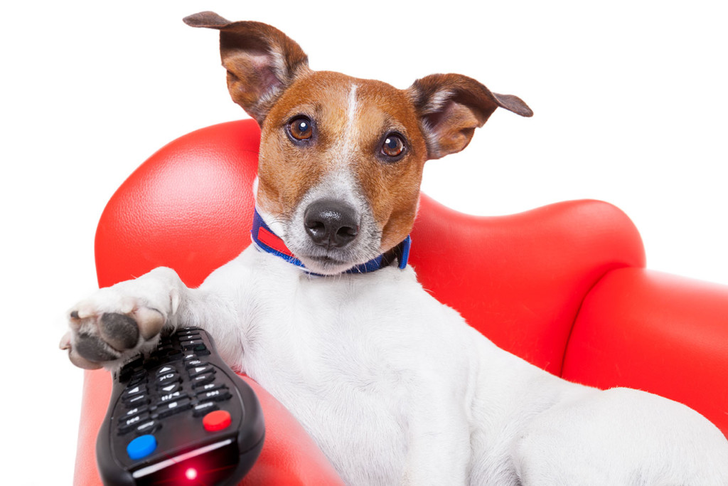 a dog with a tv remote watching the jackie jones shows