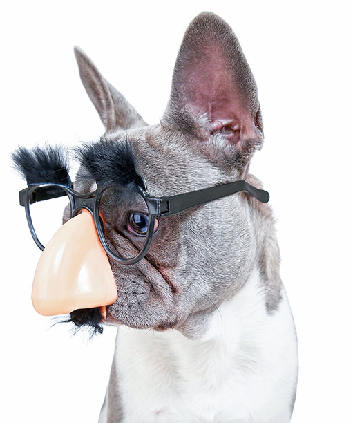Puppy with nose and glasses sideways