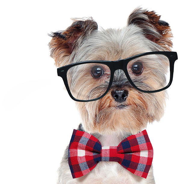 puppy with bowtie and glasses
