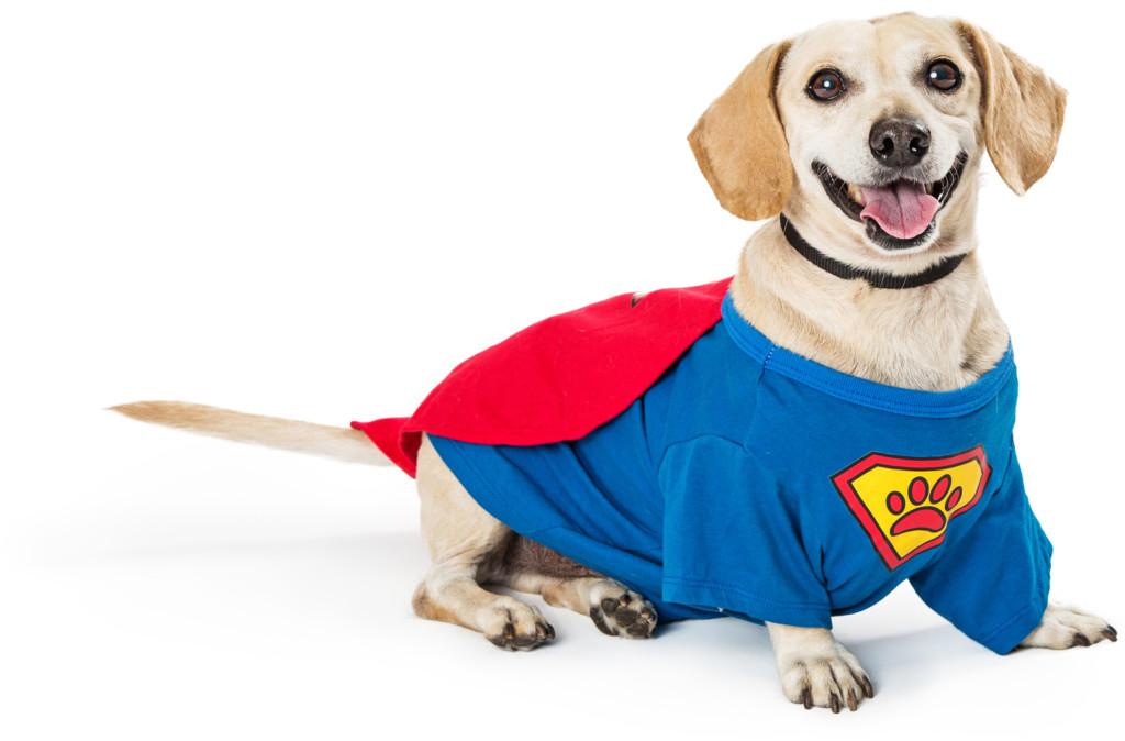 deutsch-hound